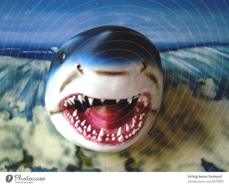 und der Haifisch, der hat Zähne... Meer Gebiss Schwimmhilfe Sylt Meerestiefe bissig
