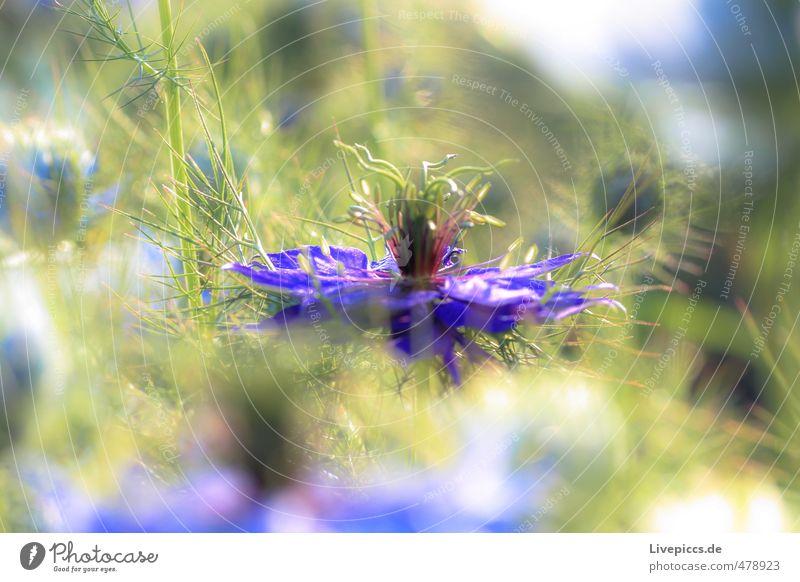 Mama´s Garten Natur blau schön grün Pflanze Sommer Sonne Blume Blatt Umwelt Wärme Blüte natürlich hell leuchten