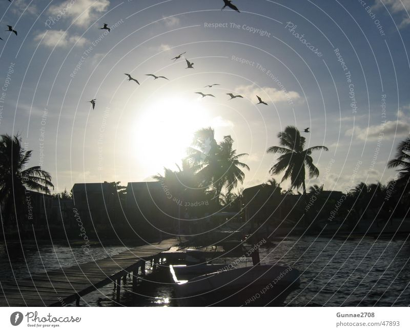 Sunset Caye Caulker Sonne Meer Strand Kuba Palme Fernweh Belize