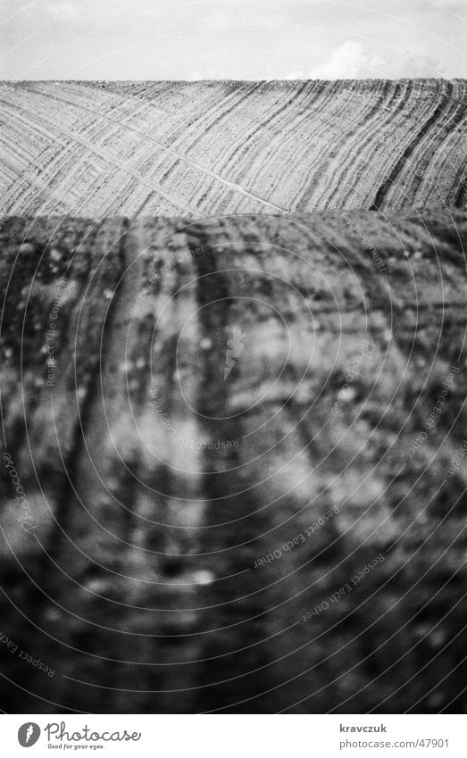 Feldversuch Hügel Abstufung Landwirtschaft Hochformat Furche Perspektive ackerfurchen Schwarzweißfoto kontraststark salzgitter Erde Bodenbelag Himmel