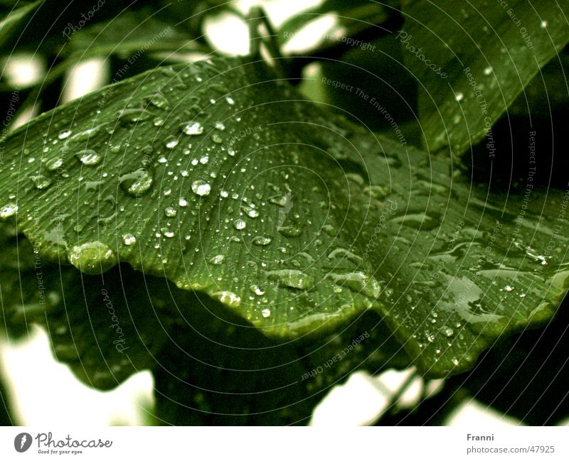 leaf Blatt grün Baum Wasser Wassertropfen Natur