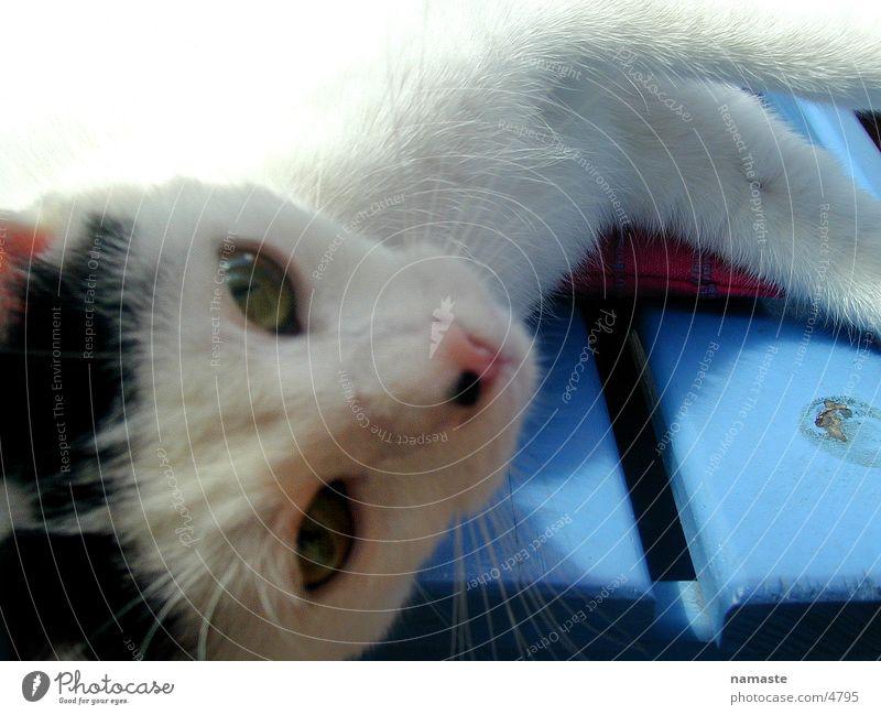 anton Freude Spielen Katze klein Langeweile Säugetier Haustier Kuscheln