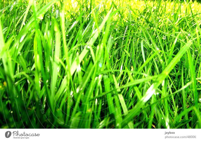 Gras Wiese grün frisch Halm Frühling Sommer Außenaufnahme Garten Bodenbelag Erfrischung