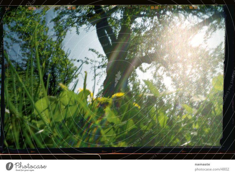 käferperspektive Natur schön Sonne Blume Freude Wald Leben Wiese Gras Frühling