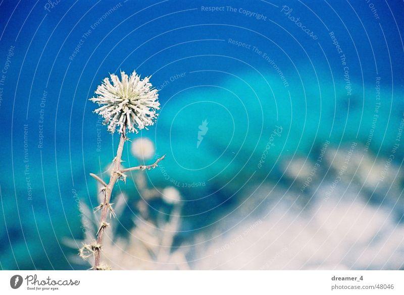Leben ab Abgrund Meer Blume blau Sommer Leben Wärme Physik trocken Am Rand Griechenland