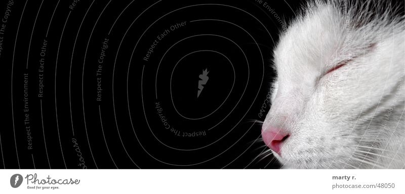 Miny weiß schwarz Auge träumen Katze Nase schlafen Fell Querformat