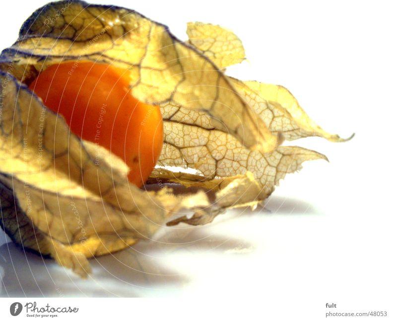 physalis Blatt gelb Ernährung Lebensmittel hell Gesundheit orange offen Frucht liegen frisch rund weich Urwald lecker Bioprodukte