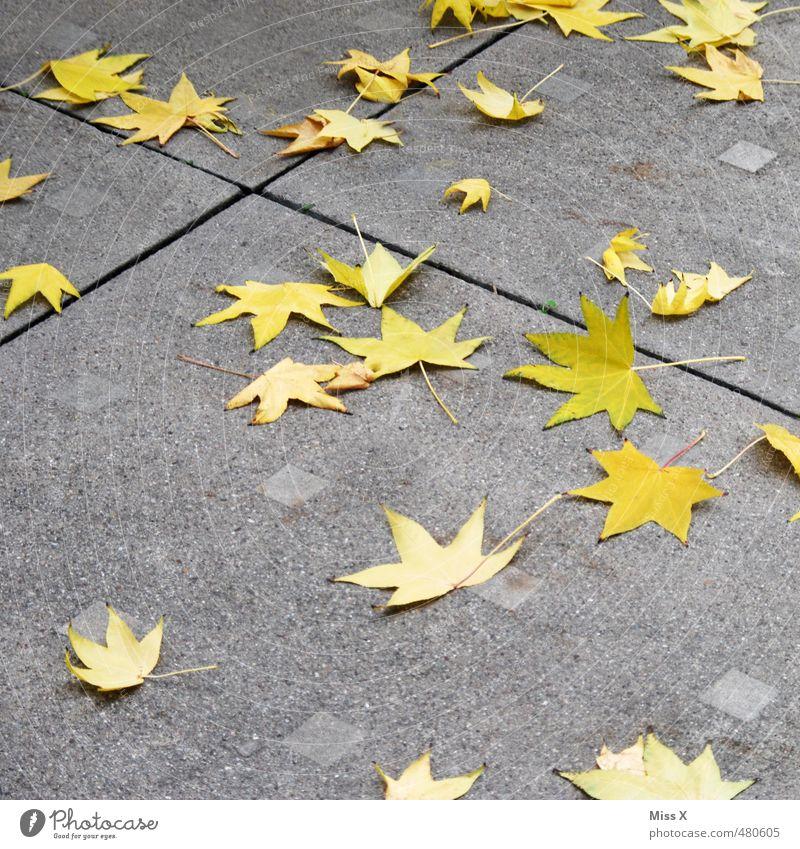 Sterntaler Herbst Blatt Straße Wege & Pfade fallen verblüht dehydrieren gelb Herbstlaub Stern (Symbol) Ahornblatt Spitzahorn Sternenhimmel Sternenhaufen