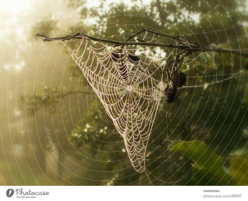 Nebelnetz Herbst Spinnennetz Wald Baum Licht Seil Natur Detailaufnahme Sonne