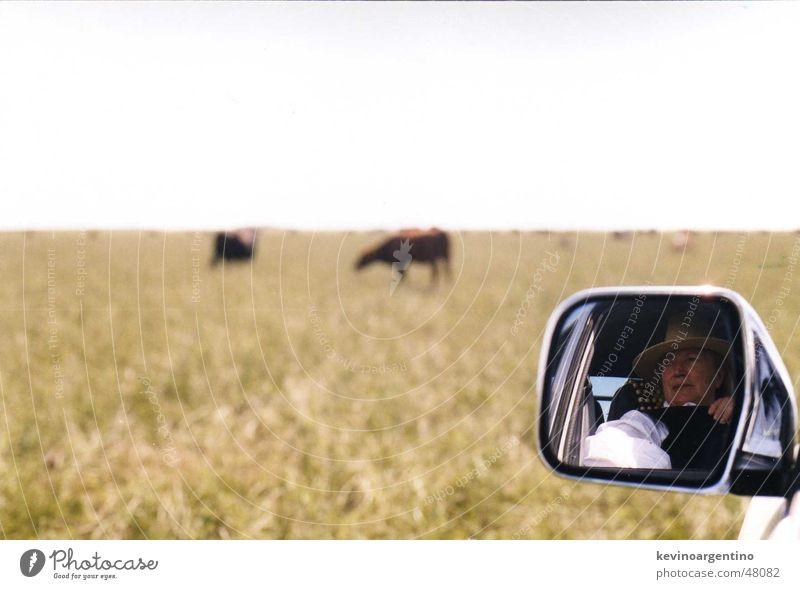 My cattle Spiegel Landwirtschaft Kuh Weide Argentinien Großgrundbesitz