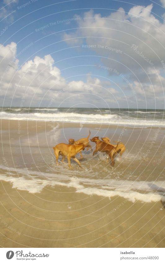 Klonhunde Wasser Meer Ferien & Urlaub & Reisen Tier Spielen Hund Gentechnik Genetik Klonen