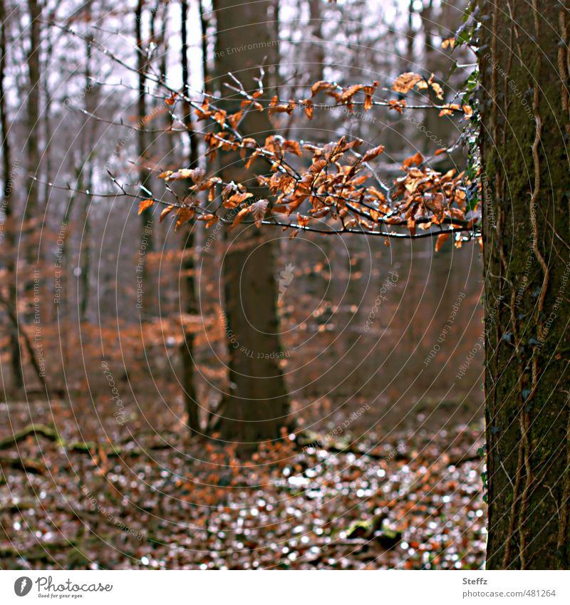 Waldbaden in einem Herbstwald Novemberwald braun Herbstlaub Waldluft Waldstimmung Stille im Wald Ruhe Erholung Lichtstimmung Novemberstimmung Lichtspiel