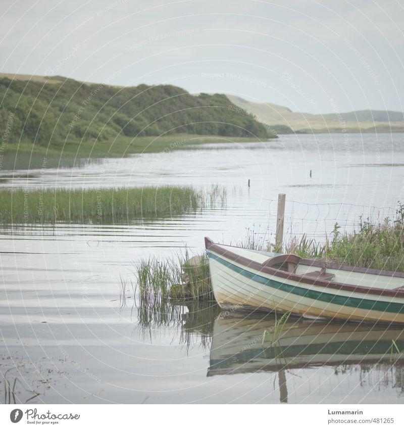 Harmonie Umwelt Landschaft Himmel Horizont Sommer Schönes Wetter Pflanze Sträucher Schilfrohr Wellen Seeufer ästhetisch einfach schön klein natürlich grau grün