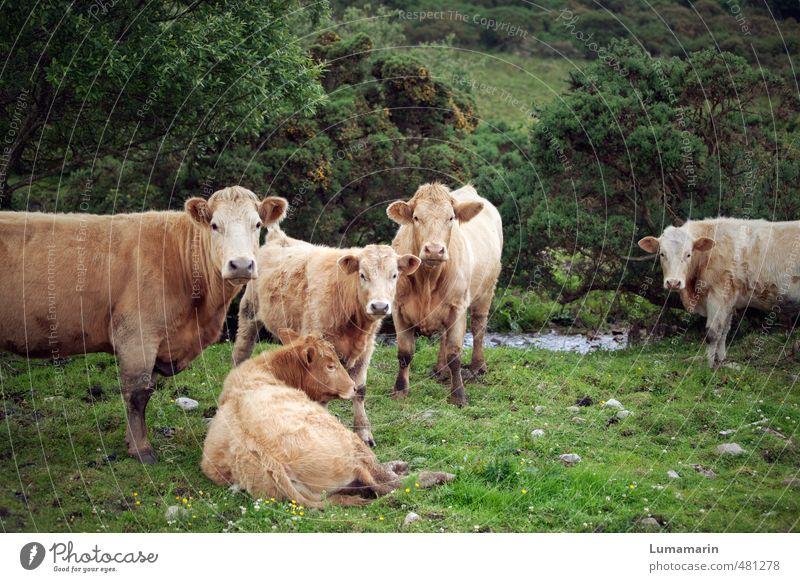 da schau her Tier Umwelt Wiese Gesundheit liegen Zusammensein frei stehen beobachten Tiergruppe einzigartig Neugier Gelassenheit Zusammenhalt