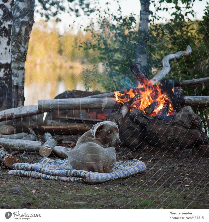 Komm ans Feuer.... Abenteuer Freiheit Natur Baum Seeufer Tier Hund beobachten Erholung genießen natürlich Zufriedenheit Vertrauen Geborgenheit loyal