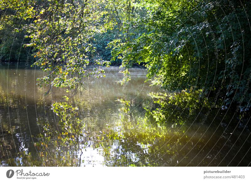 Am Teich Natur Landschaft Pflanze Sommer Schönes Wetter Baum Sträucher Menschenleer grün ruhig entdecken Idylle Waldsee Farbfoto Außenaufnahme