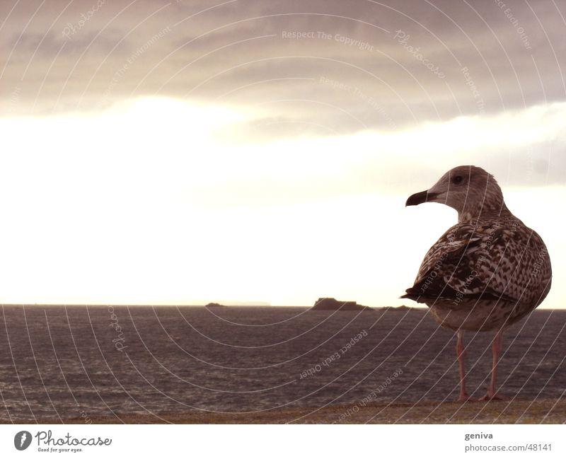 kommt ein vogel geflogen Natur Himmel Sonne Vogel