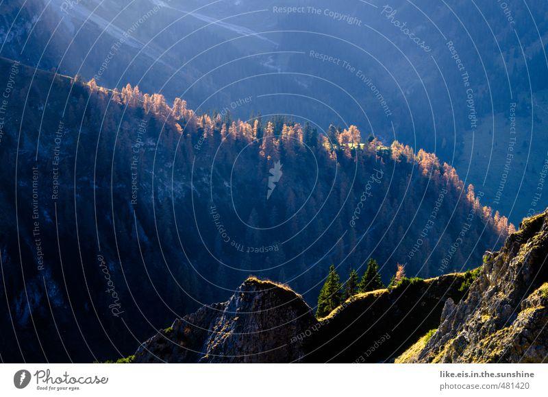 herbstliche wanderung Natur Ferien & Urlaub & Reisen Baum Erholung Einsamkeit ruhig Landschaft Ferne Wald Umwelt Berge u. Gebirge Herbst Gras Freiheit Felsen