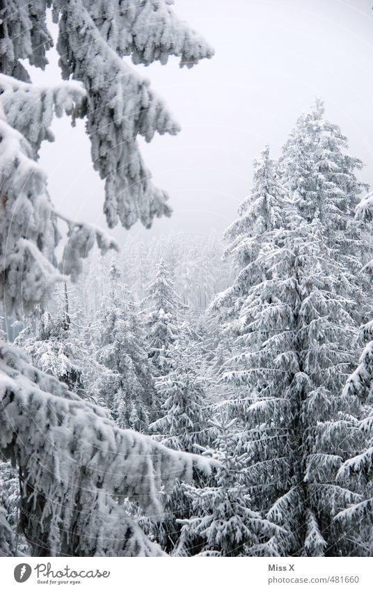 Winterwald Baum Winter Wald kalt Schnee grau Schneefall Eis Wetter Nebel Schönes Wetter Frost Ast Zweig Baumkrone Tanne