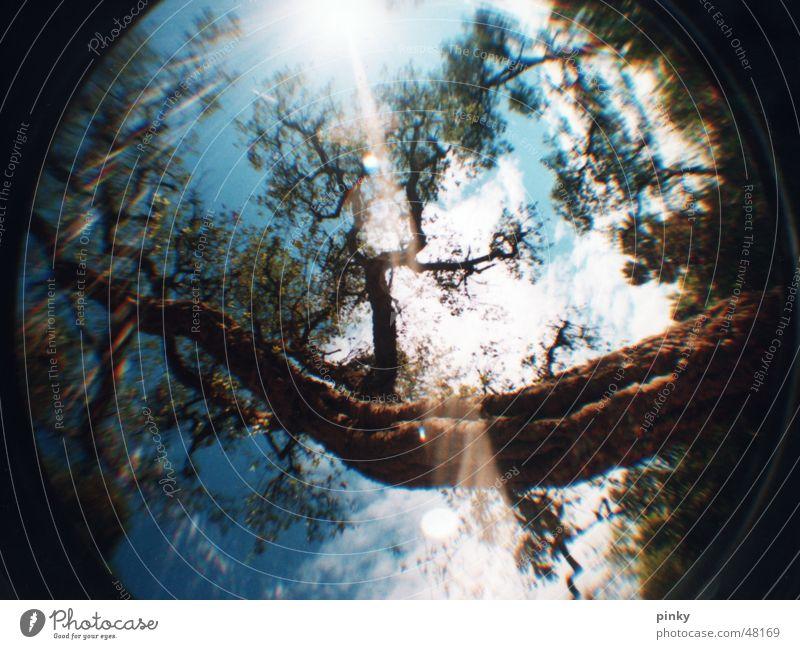 wunder baum Baum Licht Blatt Baumrinde himmelblau Sommer mystisch Barcelona Märchenwald Fischauge Park Güell Lomografie Natur Himmel Sonne Ast Linse tree sun