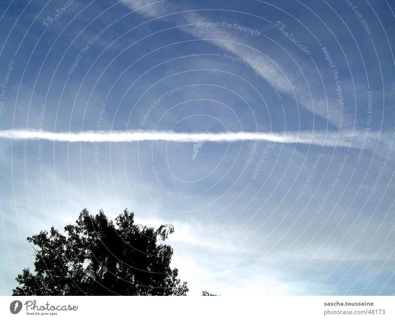 Himmelsstürmer weiß Baum blau schwarz Wolken Luftverkehr Kondensstreifen