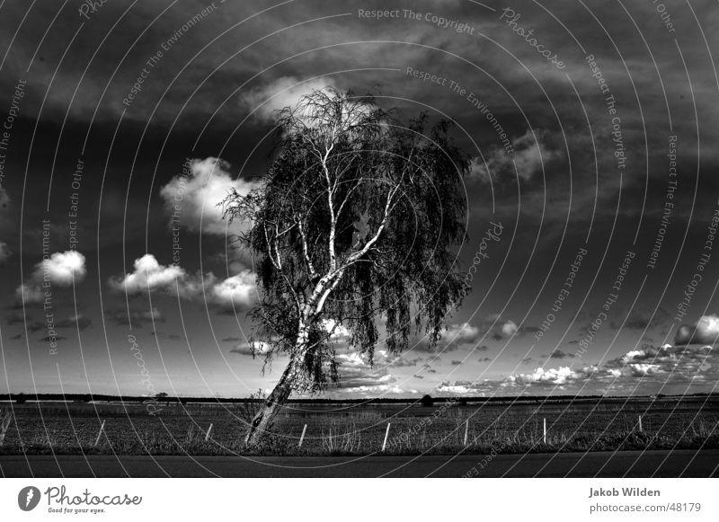 Birke unberührt rein ruhig Einsamkeit Wolken Horizont Unendlichkeit Natur Himmel Klarheit Ferne ruhe und einsamkeit im positiven sinn. weite und ruhe der natur
