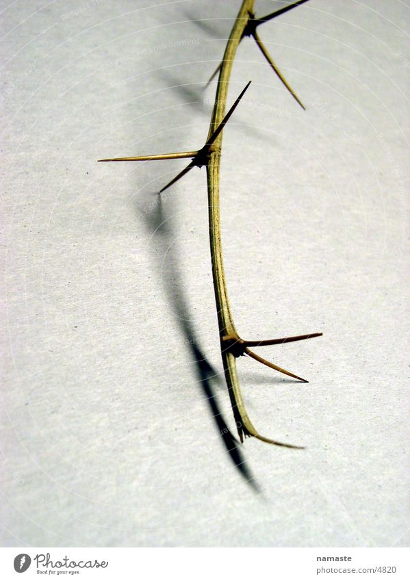 dornen pflastern seinen weg 5 Dorn Verzweiflung Zweig