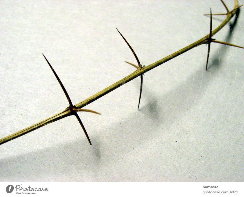 dornen pflastern seinen weg 4 Zweig Verzweiflung Dorn
