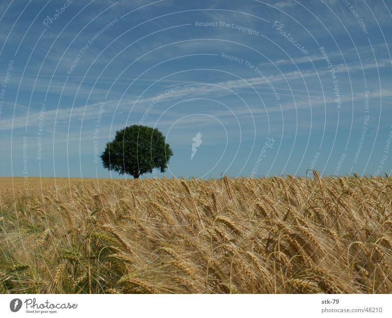 Baum im Feld gold Getreide