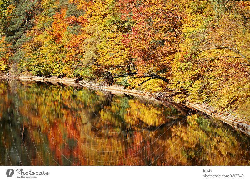 Auf zum Bärensee Ferien & Urlaub & Reisen Tourismus Ausflug Umwelt Natur Landschaft Herbst Klima Schönes Wetter Teich See dehydrieren mehrfarbig Stimmung