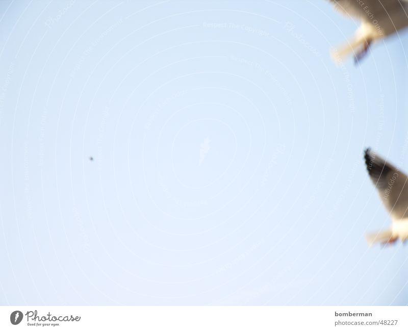 Bye Bye fly away Möwe Vogel Meer Ferien & Urlaub & Reisen Küste See Wasser Himmel Sonne