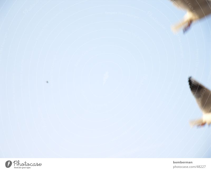 Bye Bye fly away Wasser Himmel Sonne Meer Ferien & Urlaub & Reisen See Vogel Küste Möwe