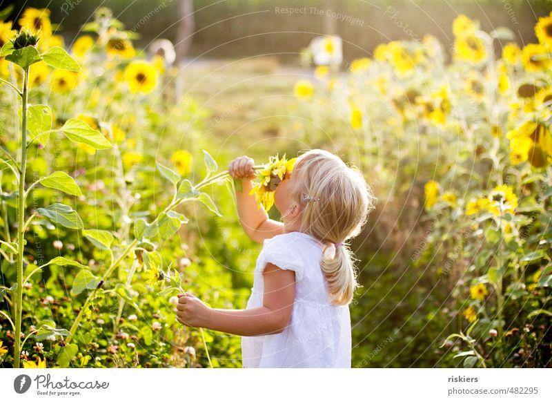 sonnenblumenkind Mensch Kind Natur Pflanze Sommer Landschaft Mädchen Blume Freude Wald gelb Umwelt feminin Herbst Glück natürlich