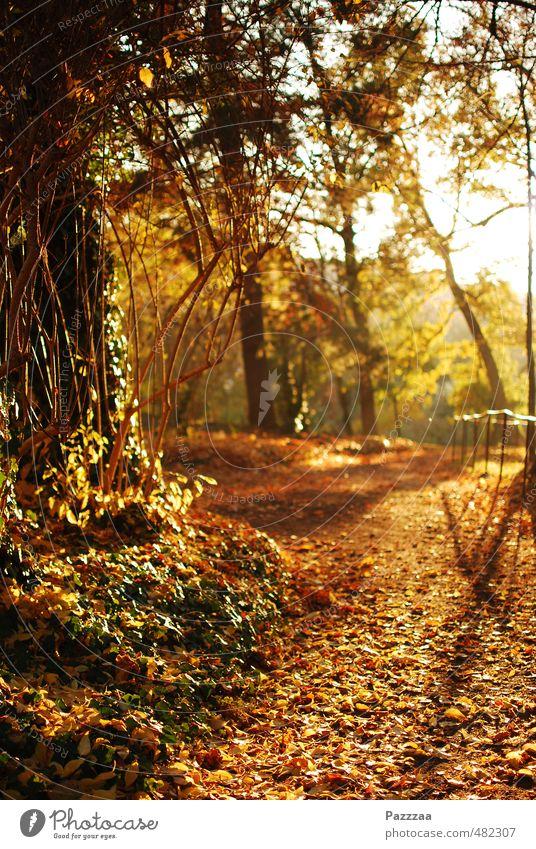 Laubsaugerfreie Idylle Erholung ruhig Garten Herbst Pflanze Park braun gelb gold Blatt goldener Herbst Farbfoto Außenaufnahme Menschenleer Gegenlicht