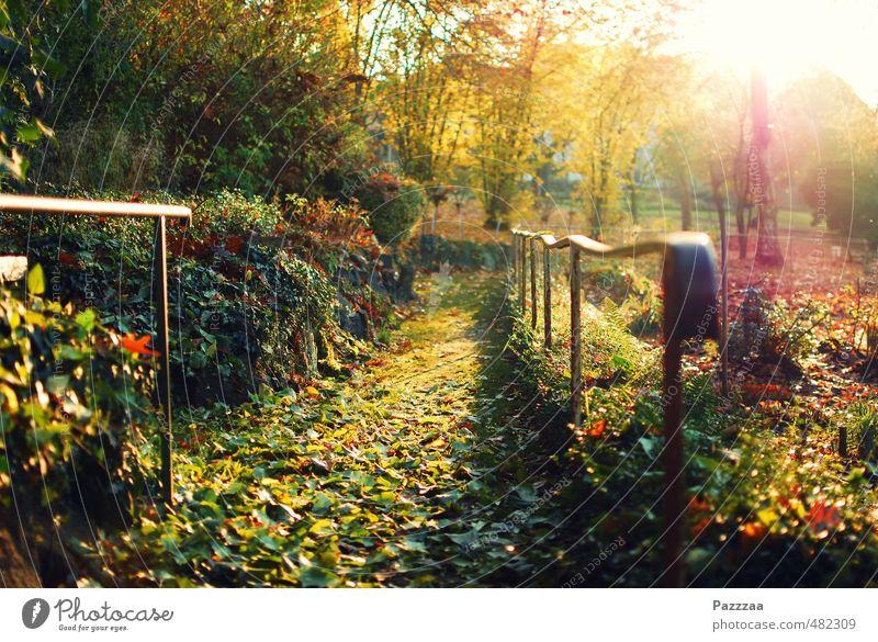 Herbstspaziergangsaussichten Natur Pflanze Sommer Erholung ruhig Blatt Garten Park Ausflug harmonisch