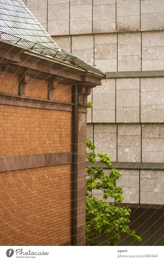 Lückenfüller Stadt Pflanze Baum Haus Wand Mauer Architektur Fassade Ordnung Perspektive Dach Kultur