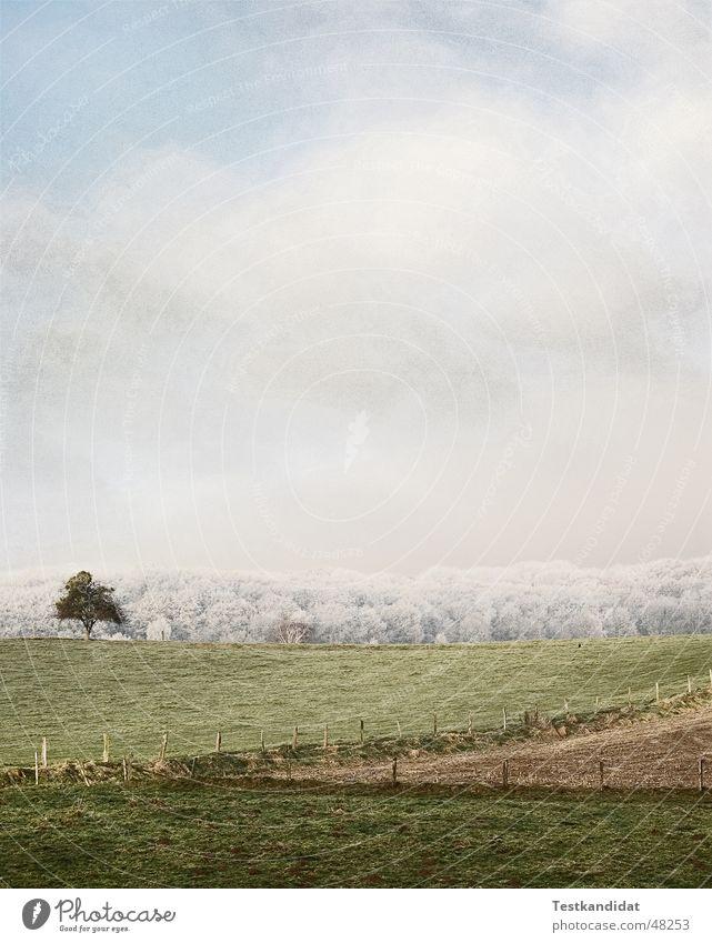 Baum trozt dem Frost Himmel weiß Wolken Wald kalt Wiese Landschaft Feld Zaun einzeln Raureif Lawine