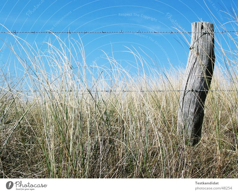 Zaun in den Dünen alt blau Strand Holz Landschaft Stranddüne Schönes Wetter Blauer Himmel Stacheldraht Zaunpfahl