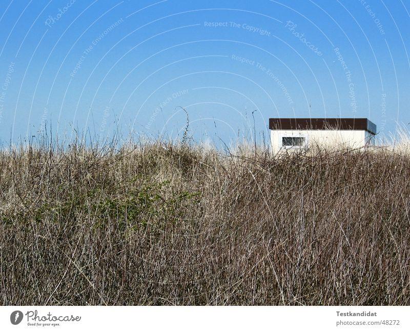 Haus in den Dünen weiß blau Strand Haus Fenster Landschaft Stranddüne Schönes Wetter Blauer Himmel