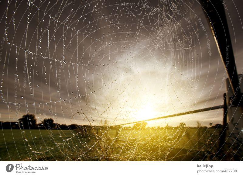 der fänger im roggen Umwelt Natur Landschaft Pflanze Tier Wasser Wassertropfen Himmel Sonne Sonnenaufgang Sonnenuntergang Herbst Netz Netzwerk Tropfen