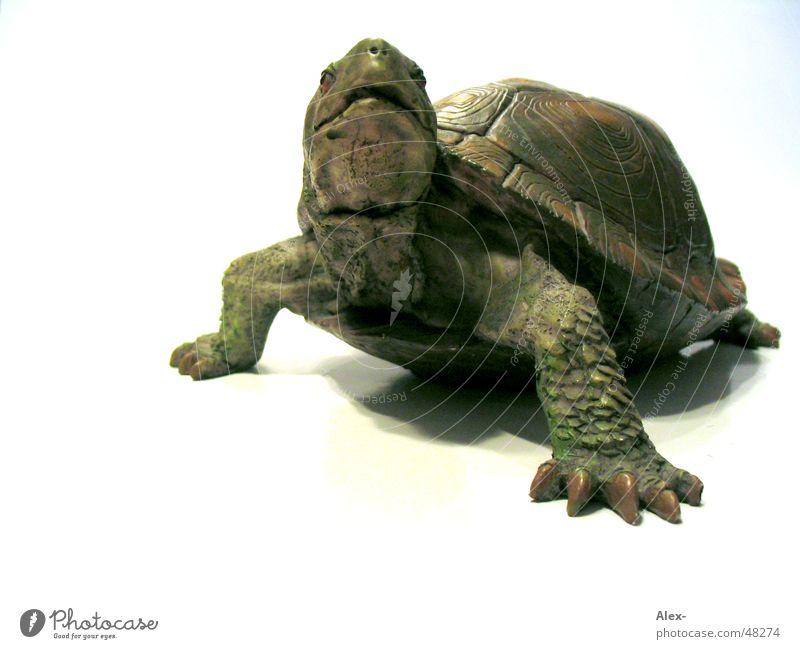 Schildkröte Tier langsam Schilder & Markierungen Kröte gepanzert reptiel