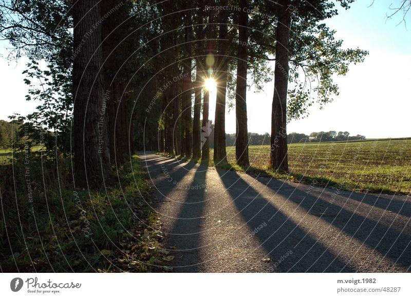 Schattenspiel Himmel Baum Sonne Einsamkeit Ferne Straße träumen Wege & Pfade Landschaft Feld Horizont Unendlichkeit Idylle Sonnenstrahlen Allee Wolkenloser Himmel