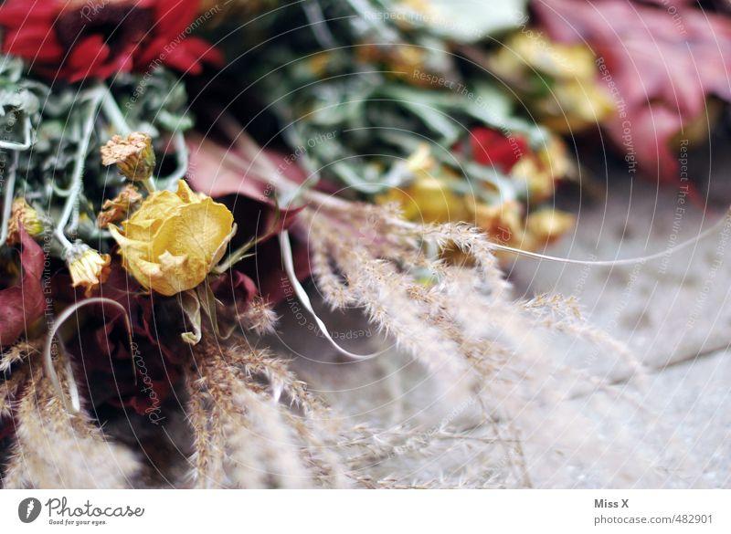 Vertrocknet Herbst Blume Blüte verblüht dehydrieren trocken Stimmung Traurigkeit Trauer Ende Endzeitstimmung Verfall Vergänglichkeit Trockenblume Grabschmuck
