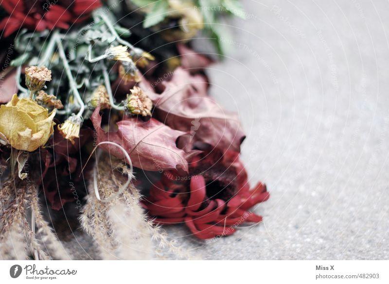 Trocken Dekoration & Verzierung Herbst Blume Blatt Blüte verblüht dehydrieren trist Stimmung Traurigkeit Trauer Tod Liebeskummer Endzeitstimmung Verfall