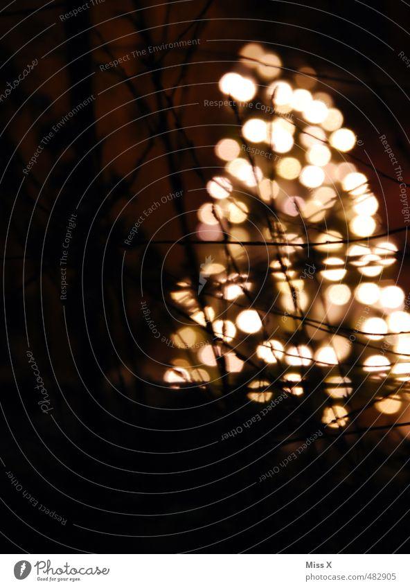 Weihnachtsbaum Garten Dekoration & Verzierung Feste & Feiern Weihnachten & Advent Winter Baum leuchten dunkel hell Weihnachtsbeleuchtung Tanne Beleuchtung