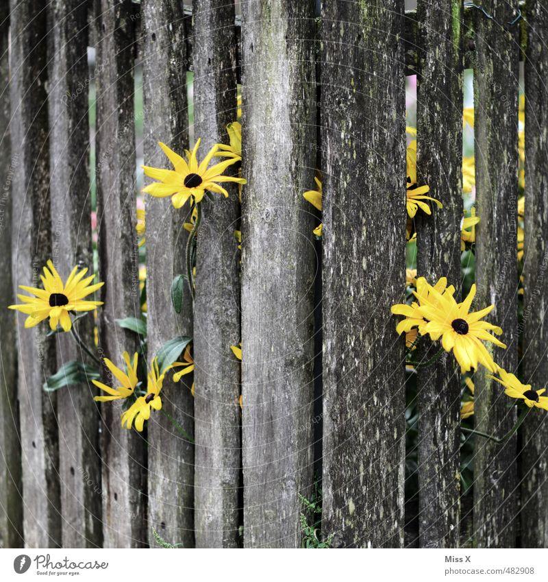 Durchbruch Garten Sommer Herbst Blume Blühend Duft Wachstum stark gelb Gefühle Stimmung Tugend Tapferkeit Erfolg Kraft Willensstärke Hoffnung gefangen