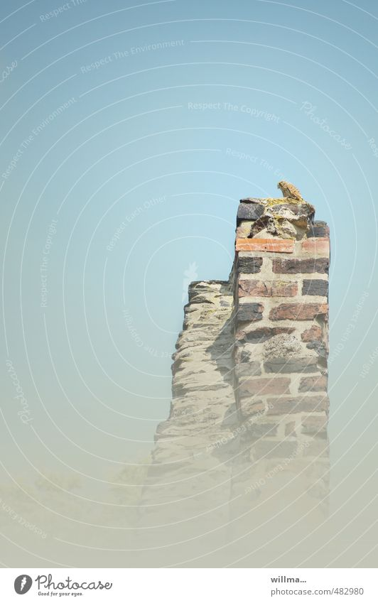 traum vom fliegen Einsamkeit Tier Mauer oben Vogel Wildtier beobachten Turm Höhenangst Flugangst Wachsamkeit Falken Turmfalke