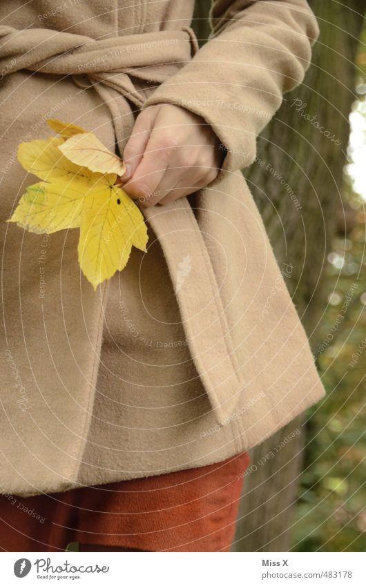 Ahorn Mensch feminin Junge Frau Jugendliche Hand 1 Herbst Blatt Jacke Mantel gelb Freude Fröhlichkeit Zufriedenheit Lebensfreude Farbe Natur Bastelmaterial