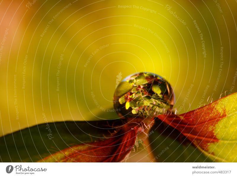 Glücksklee Pflanze Wassertropfen Blatt Wärme grün rot Geborgenheit Romantik Hoffnung Farbfoto Innenaufnahme Menschenleer Textfreiraum oben Kunstlicht Unschärfe