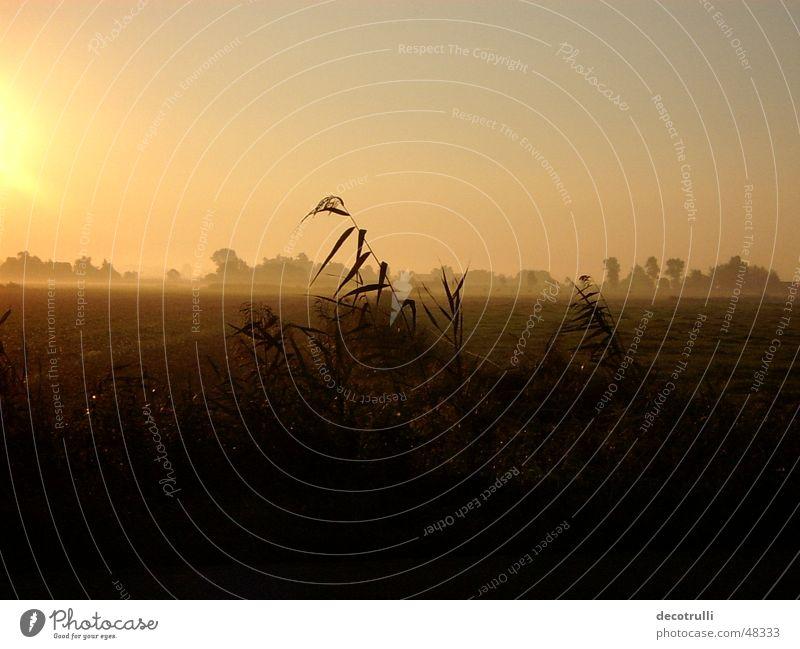Morgennebel ruhig Einsamkeit Graffiti Feld Nebel Beginn Gelassenheit Zauberei u. Magie